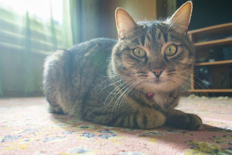 Katten av huset ligger i solen arkivfoton