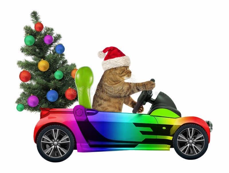 Katten bär en julgran arkivbild
