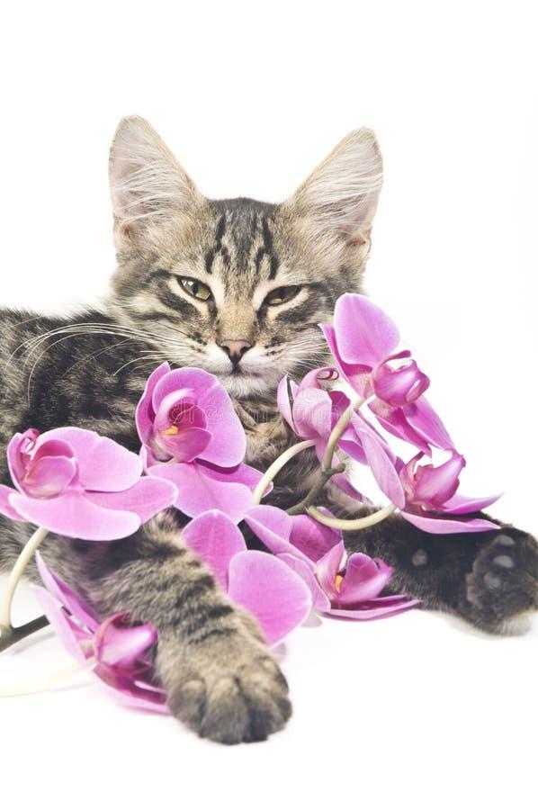 katten blommar pink royaltyfri fotografi