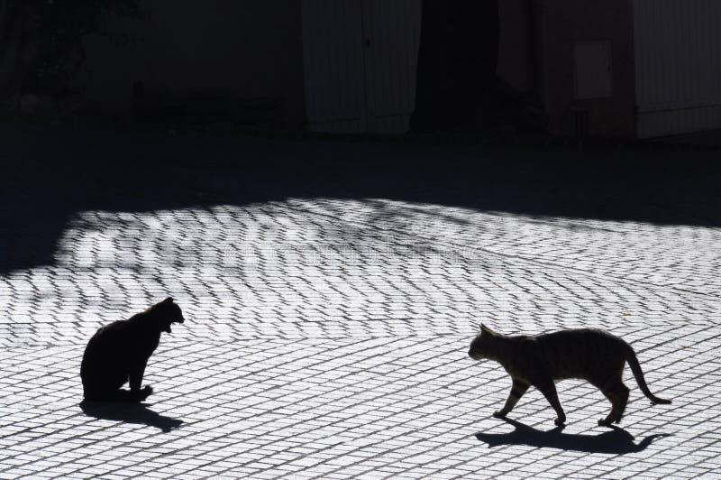 Katten in Castellet-dorp, Frankrijk royalty-vrije stock foto