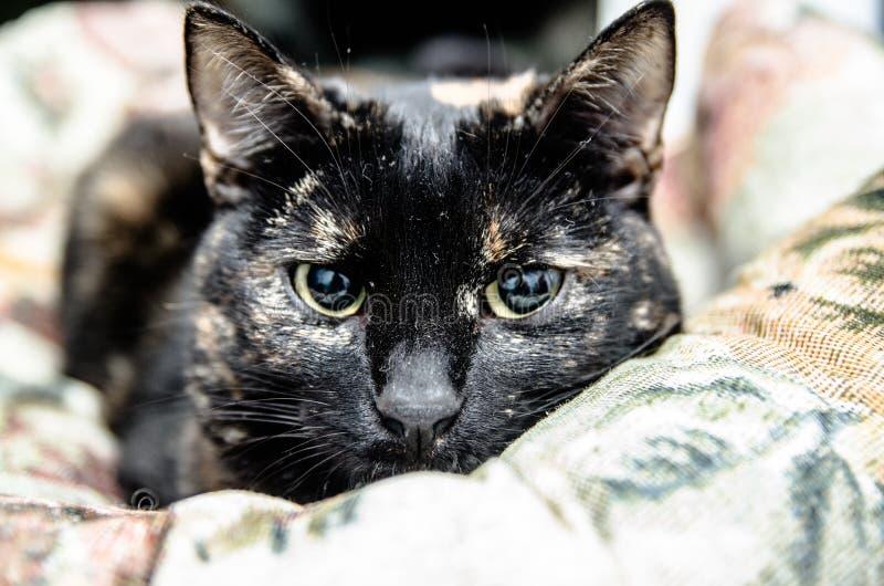 katten De huisdieren zijn dieren die door mensen zijn geacclimatiseerd stock foto's