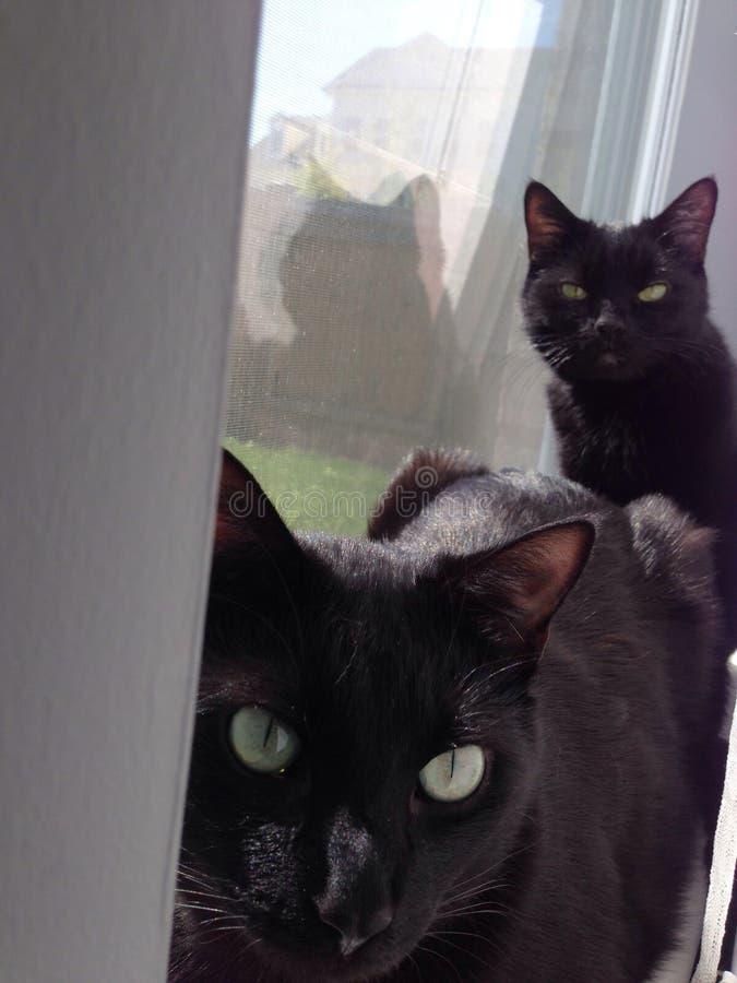 Katten die in het venster zonnen royalty-vrije stock afbeelding