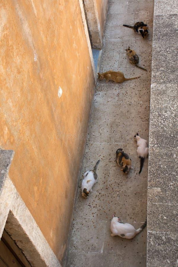 Katten die in klooster van Agia Triada, Kreta, Griekenland eten Hoogste mening royalty-vrije stock foto's