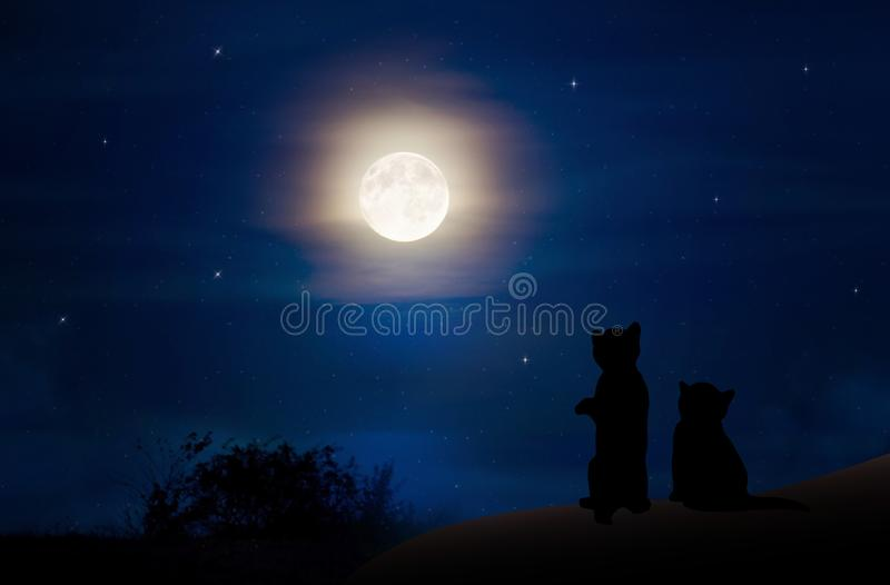 Katten die op de de hemelachtergrond letten van de volle maannacht royalty-vrije stock foto