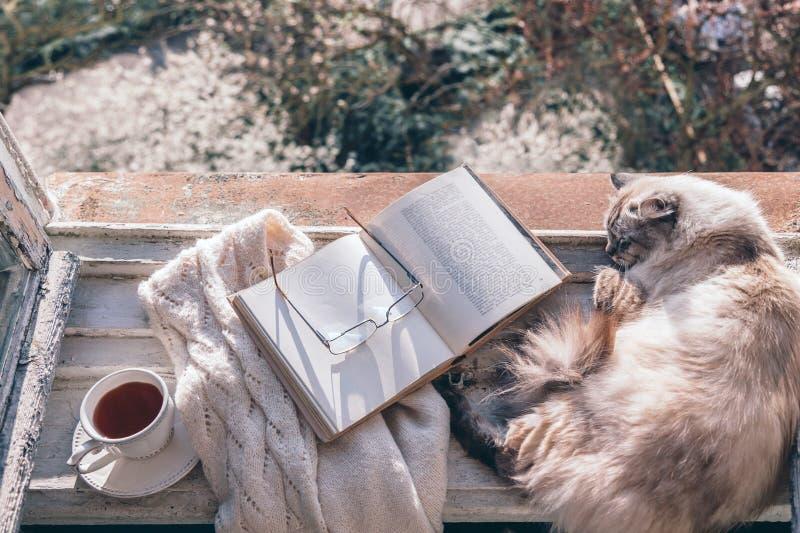 Katten die op venstervensterbank door geopend boek slapen stock fotografie