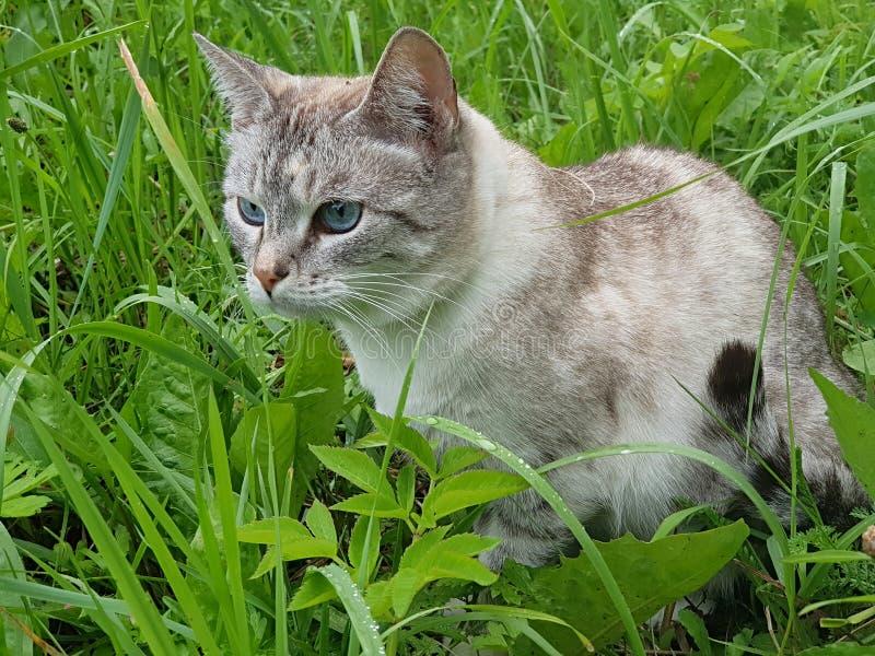 Katten dolde i gräset royaltyfri bild