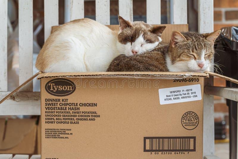 Katten in een doos stock afbeeldingen