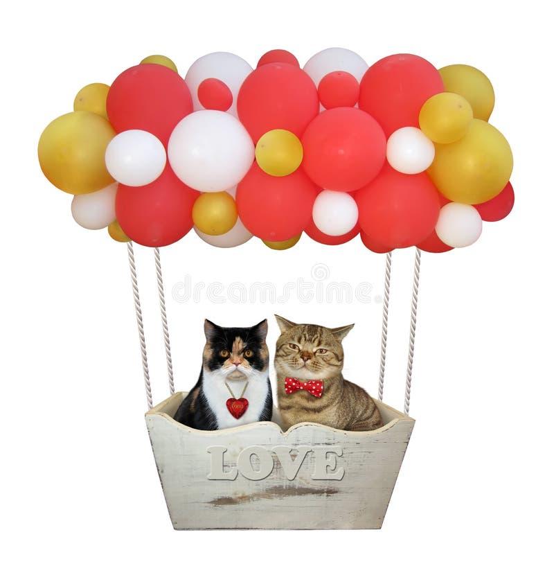 Katten in een kleurenballons royalty-vrije stock afbeelding