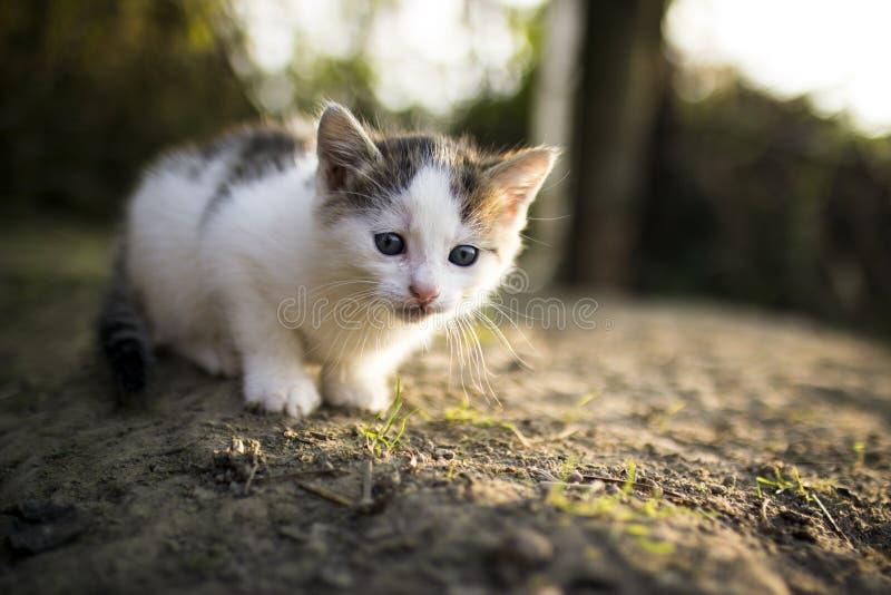Katten eenzaam zoet dierlijk huisdier stock afbeelding