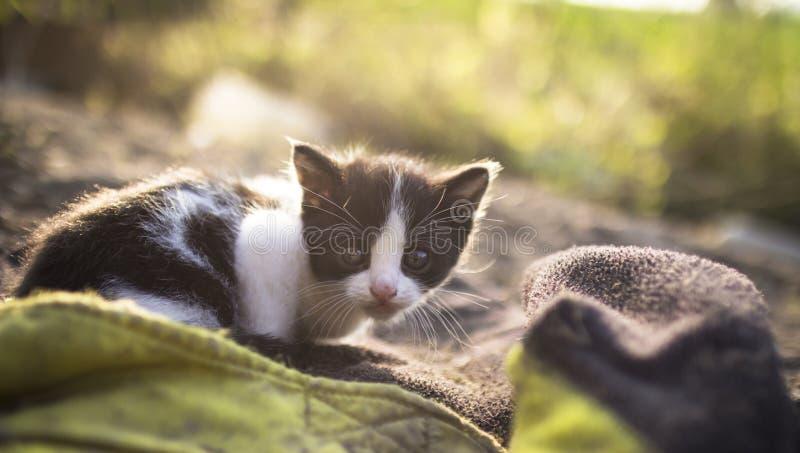 Katten eenzaam zoet dierlijk huisdier stock foto's