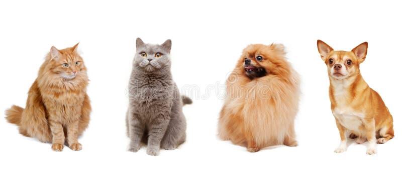 Katten en honden stock fotografie