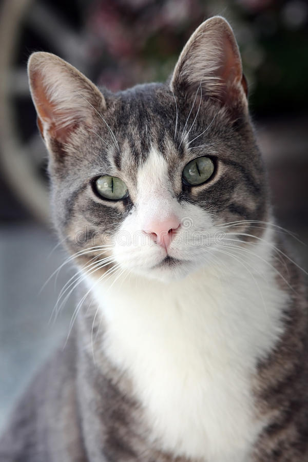 katten eyes s royaltyfri foto
