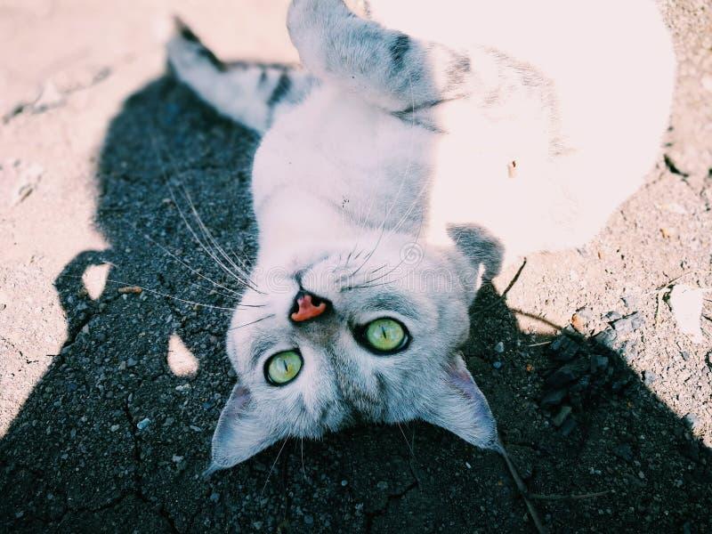 katten eyes yellow royaltyfri fotografi