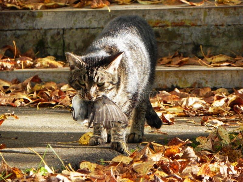 Katten fångade fågeln Rovdjuret gick på jakten och fångar deras egen mat Detaljer och n?rbild arkivfoton