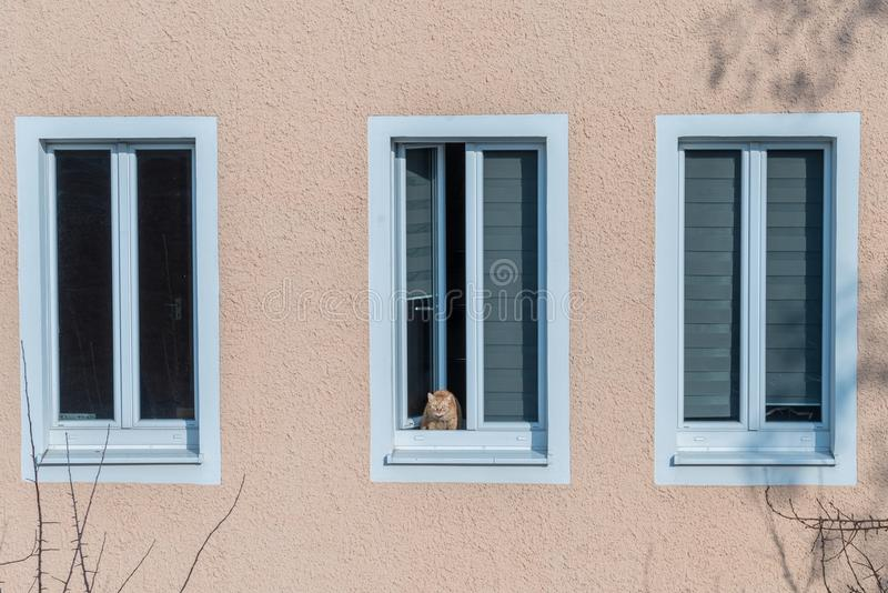 Katten för rödaktig brunt sitter på en fönsterbräda och ser ut fönstret royaltyfri fotografi
