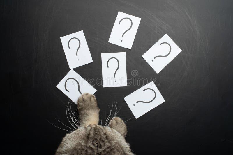 katten försöker att smyga sig klistermärkear med en frågefläck arkivfoto
