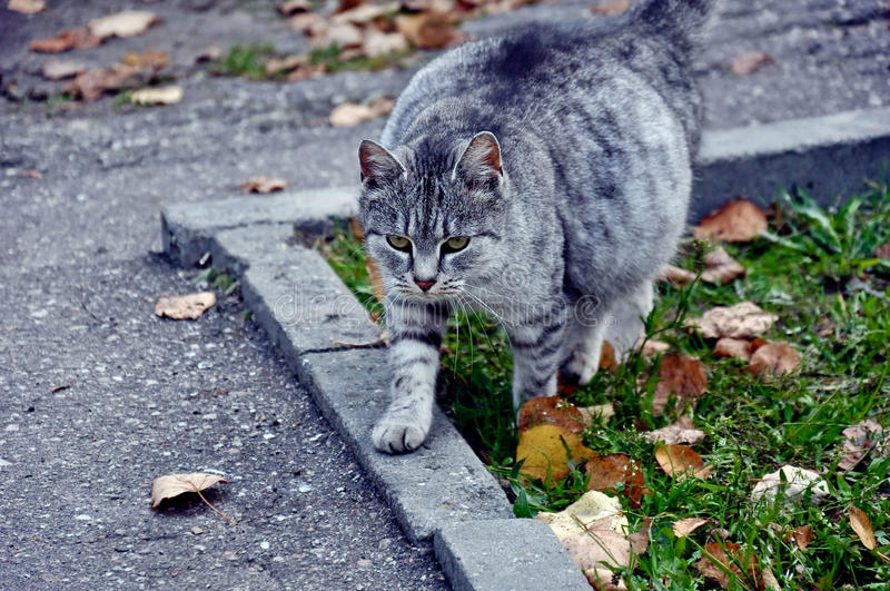 Katten går arkivfoton