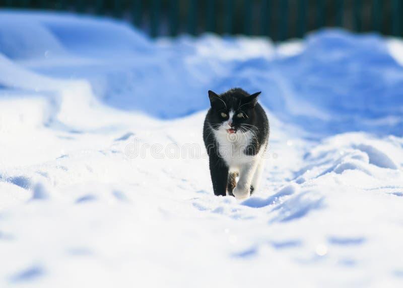 katten går i det vita fluffiga insnöat vintergården arkivfoto