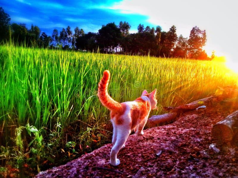 Katten går i lantgård royaltyfria bilder
