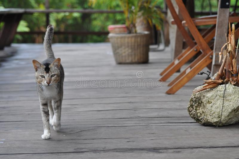 katten går på catwalken arkivfoto