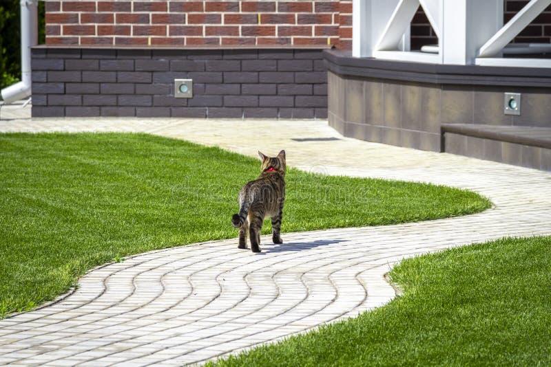 Katten går runt om gården royaltyfria foton