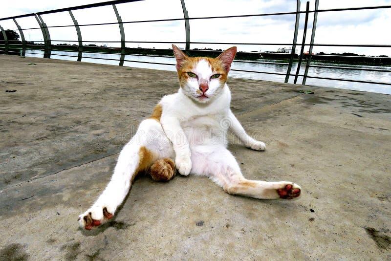 Katten gör ren kroppen fotografering för bildbyråer