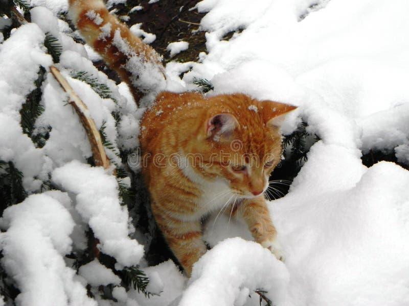 Katten g?r utomhus i vintern H?rlig vinternatur och r?d katt Detaljer och n?rbild arkivbild