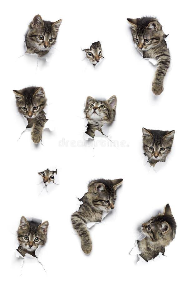 Katten in gaten van document stock afbeelding