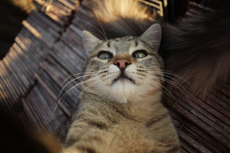 Katten gillar selfie royaltyfri fotografi