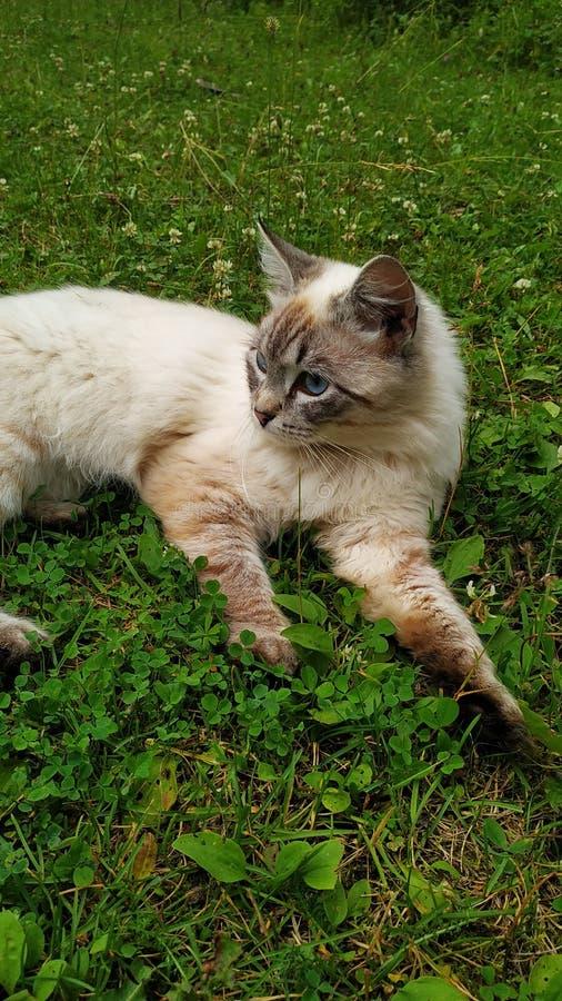 Katten, gräs och blommor är bra royaltyfri foto