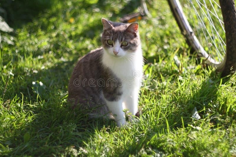 Katten håller ögonen på angeläget kattungen på gatan royaltyfria bilder