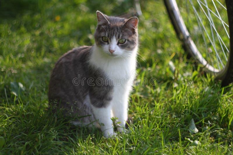 Katten håller ögonen på kattungen (кРÐΜÐ'иÑ-'Ð för  Ñ ÑˆÐºÐ° ¾ Д·,¼ FÖR ¾ Ð FÖR ½ кРFÖR 'ÐΜÐ FÖR а кР¾ Ñ) royaltyfri fotografi