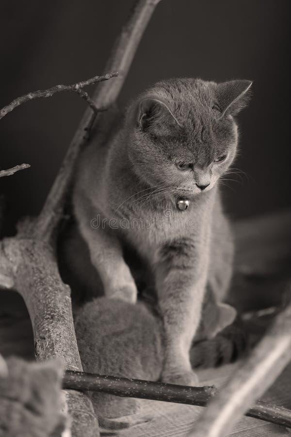 Katten headshot portret, royalty-vrije stock foto