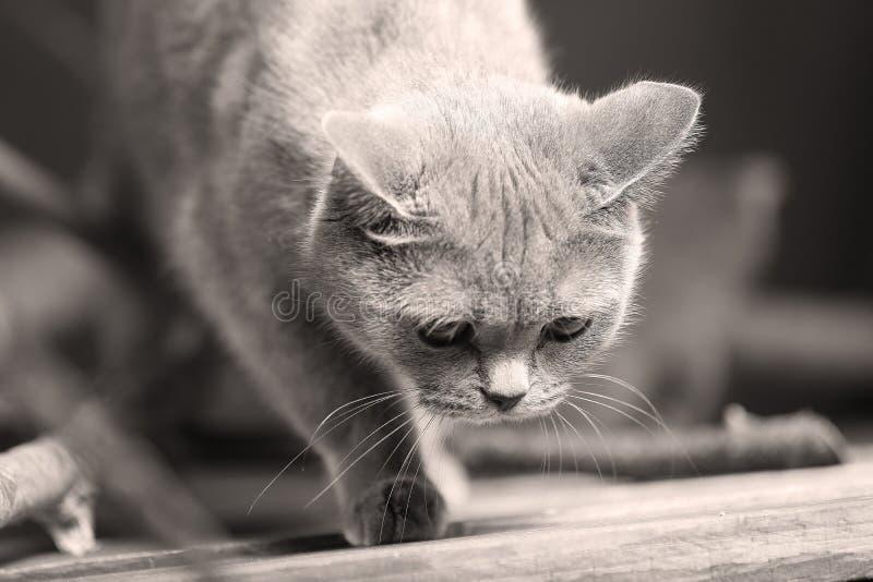 Katten headshot portret, royalty-vrije stock fotografie