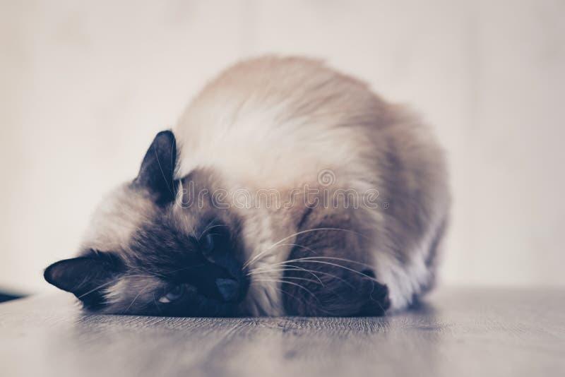Katten het zieke leuke katje liggen Geïsoleerde stock foto