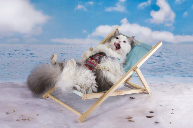 Katten i en baddräkt solbadar på stranden royaltyfri bild