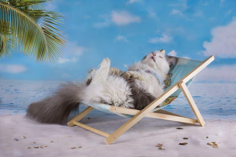 Katten i en baddräkt solbadar på stranden arkivbilder
