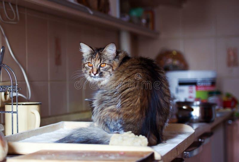 Katten i köket har gjort skada Hem- katt royaltyfri foto