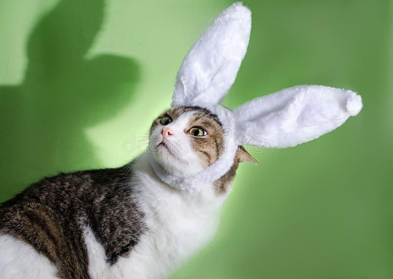 Katten i kaninöron skrämdes av skuggan royaltyfria foton