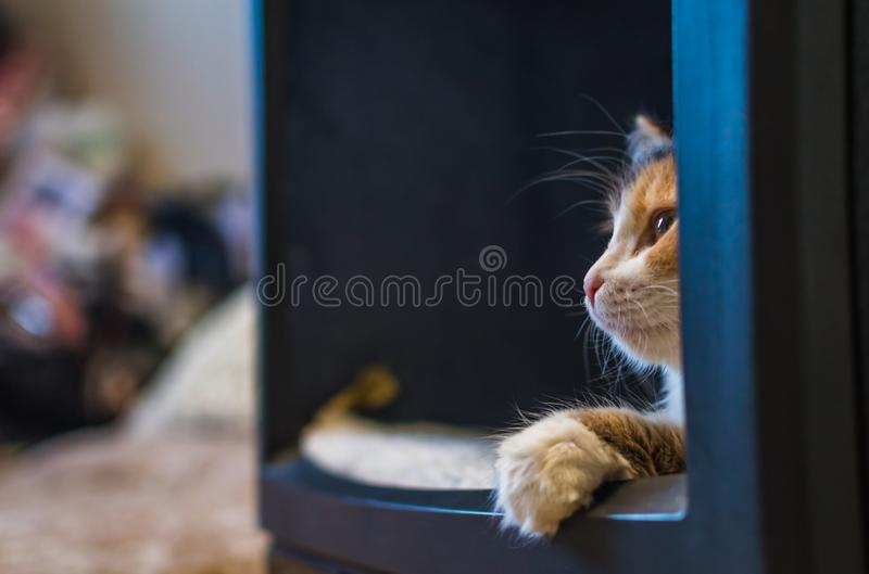 Katten i TV:N royaltyfri fotografi