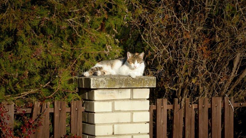 Katten kallade soligt arkivbilder