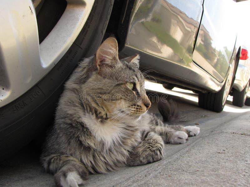 Katten, kat, mijn kat stock fotografie