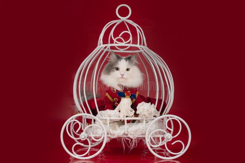 Katten klädde, som en hertig rider i en vagn royaltyfria bilder