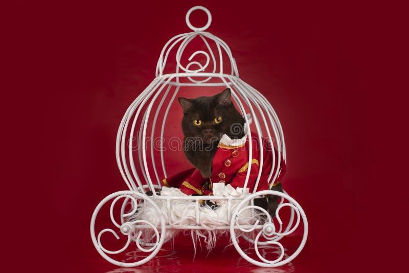 Katten klädde, som en hertig rider i en vagn royaltyfri fotografi