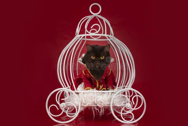 Katten klädde, som en hertig rider i en vagn royaltyfri bild