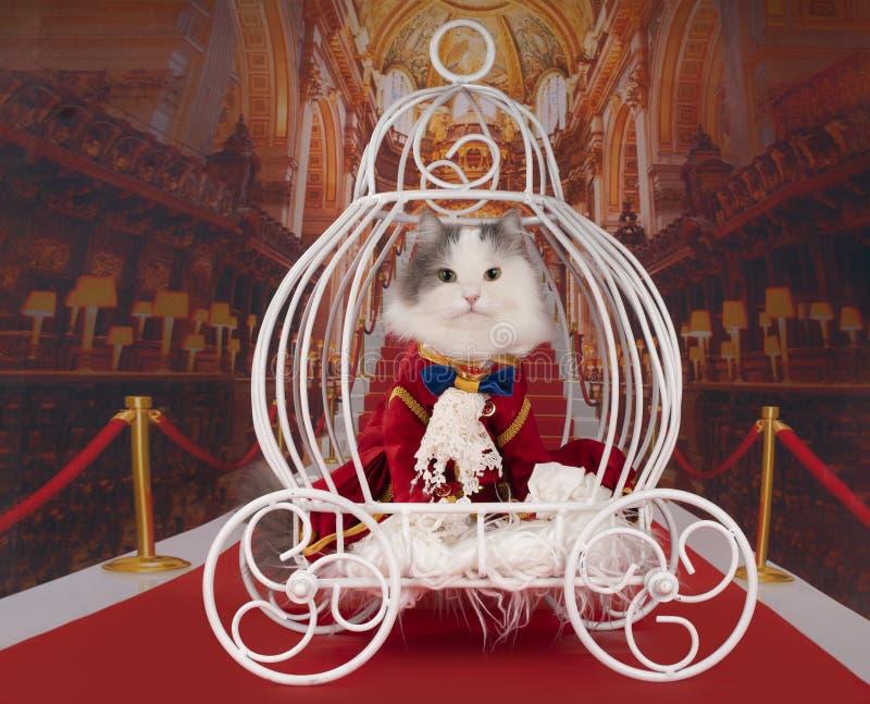Katten klädde, som en hertig rider i en vagn fotografering för bildbyråer