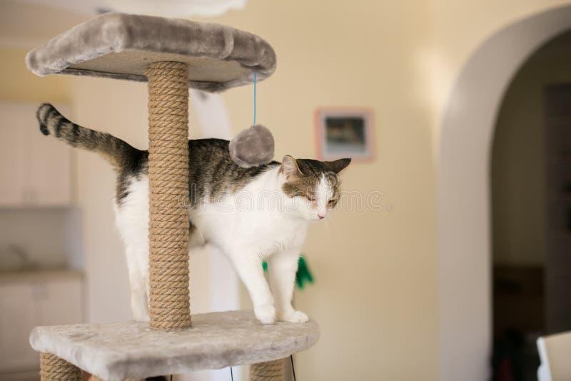 Katten klättrade på tornet för katter arkivfoto