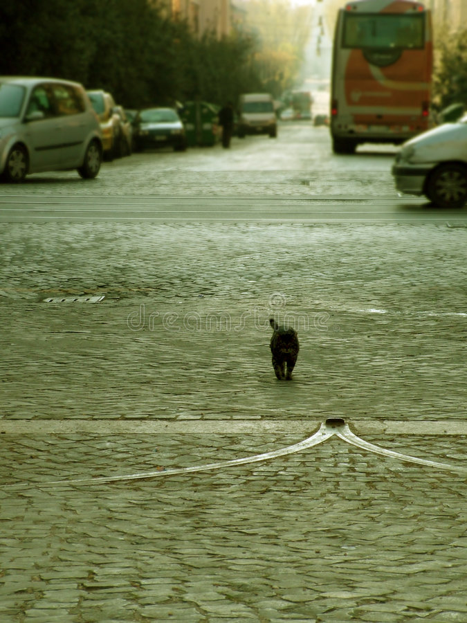 katten kopplade av royaltyfri foto