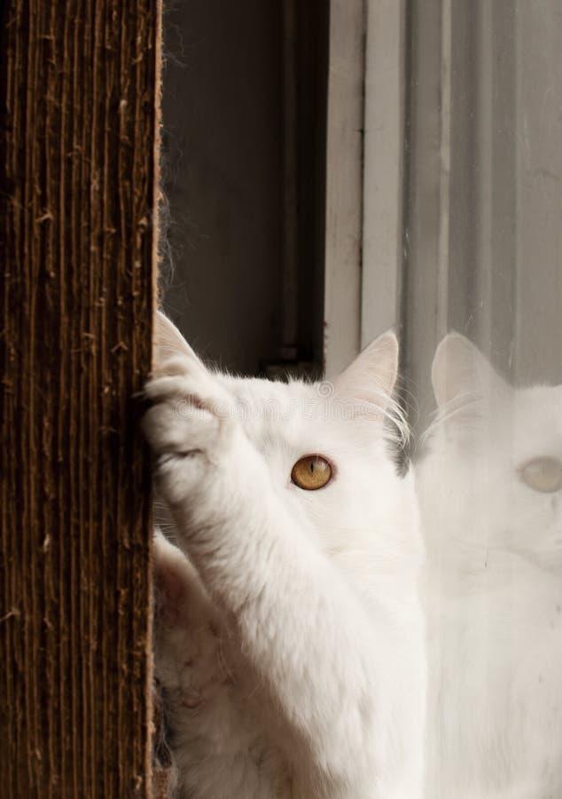 Katten krassend meubilair royalty-vrije stock afbeeldingen