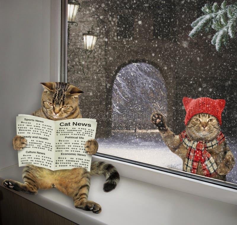 Katten läser en tidning på fönsterbrädan 2 royaltyfria foton